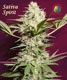Sativa Spirit - click to compare prices